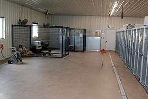 Dog pens - Rocky Mountain Kennels in Longmont, Colorado