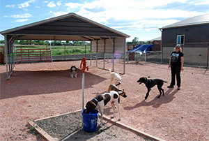 Exercise and water area - Rocky Mountain Kennels in Longmont, Colorado